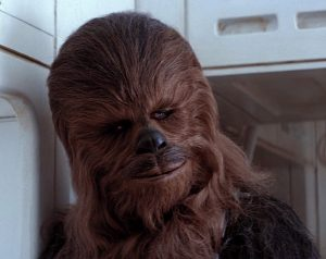 Chewie head shot